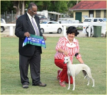 Folly winning Intermediate in Show