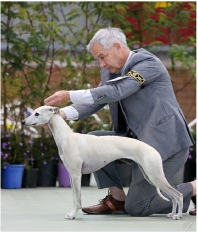 Folly with Harold at the Whippet Assoc of Victoria Specialty in Sept 2014