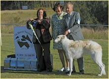 Sholly winning Puppy in Show at the Borzoi National 2012